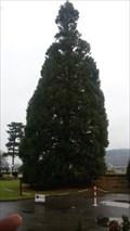 Image for Tallest Tree - Bad Breisig - RLP - Germany