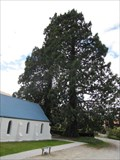 Image for St. John's  Presbyterian Church Sequoioideae Trees - Arrowtown, New Zealand