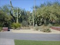 Image for Joseph Wood Krutch cactus garden - University of Arizona
