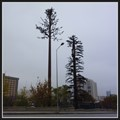Image for Two Pine Tree Cell Towers - Ankara, Turkey  - Ankara, Turkey