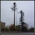 Image for Two Pine Tree Cell Towers - Ankara, Turkey  - Ankara, Turkey
