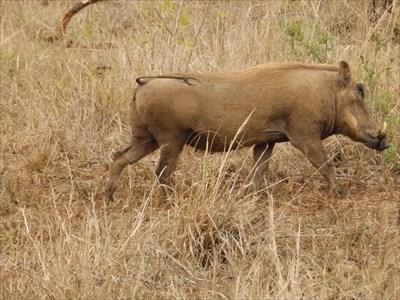 Hluhluwe–iMfolozi Park - Central Zululand