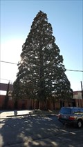 Image for Perry Hill Tree - Yreka, CA