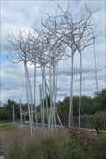 Image for Stand of Birch - Peuplement de bouleaux - Ottawa, Ontario