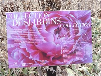 Collection Desjardins no-2 une plate bande de 1 à 36 plants de Pivoine en demi lune.  No collection Desjardins-2 a strip plate from 1 to 36 seedlings Peony half moon.