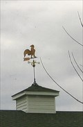 Image for Rooster Riding a Pointless Arrow - Salisbury, MO