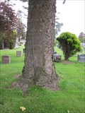 Image for Pole eating Tree - Colma, CA