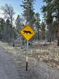 Image for Mountain Lion Crossing-Grand Canyon S. Rim