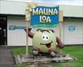 Image for Mauna Loa Macadamia Nut  - Keaau, HI