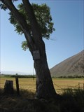 Image for The Hanging Tree - Genoa, NV