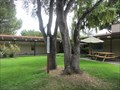 Image for Unitarian Universalist Church of Palo Alto Peace Pole - Palo Alto, CA