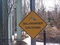 Image for Salamander Crossing