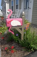 Image for Flamingo  -  Provincetown, MA