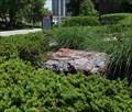 Image for Petrified logs - University of Cincinnati, Cincinnati, Ohio