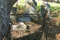 Image for Tree Munching on a Fence in the Cemetery - Marthasville, MO