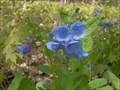 Image for Greenmead Historical Park (Joshua Simmons Farm) - Livonia, MI