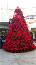 Image for Poinssettia Christmas Tree  -  San Diego, CA