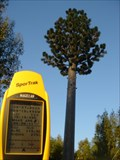 Image for Vale Milhaços Disguised Cell Tower