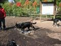 Image for Banneker Dog Park