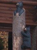 Image for Bears outside Flapjack's Pancake Cabin - Pigeon Forge, TN