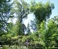 Image for Civil War Memorial Grove - Capitol Park - Sacramento CA