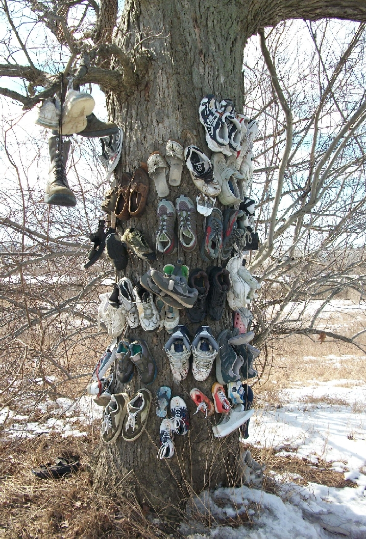 Paris Ontario Shoe Tree Image