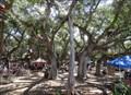 Image for Lahaina Banyan Court Park - Lahaina, Maui, HI