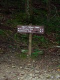 Image for West Prong Trail - Great Smoky Mountains National Park, TN