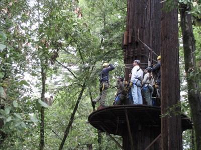 Tree Platform, Mt. Hermon, CA