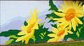 Image for Yellow Daisies - Summerland, British Columbia
