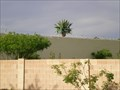 Image for East Bar 4 Pseudopalm - Gilbert, AZ