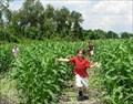 Image for Long & Scotts Farm Corn Maze