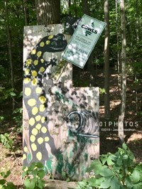 An eight-foot tall hand-painted rendition of a spotted salamander on a plywood sign on the east side of Henry Street near the southern tunnel.