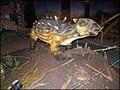 Image for Dinopark OC Harfa, Praha, CZ