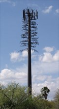 Image for Is it a Tree?  A Cell Tower? - Winter Park, Florida
