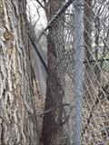 Image for Fence Eating Tree - Niakwa Rd - Winnipeg MB