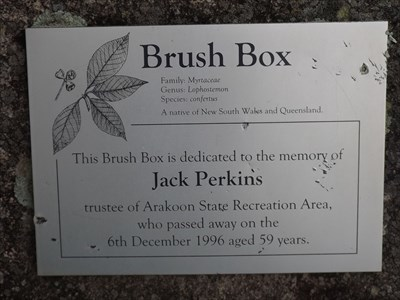 The plaque beside the Brush Box tree dedicated to Jack Perkins.0907, Sunday, 29 October, 2017