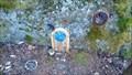 Image for Mt Erskine Fairy Door 4