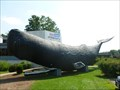 Image for 'Connie' The Life-Size Sperm Whale - West Hartford, CT