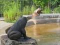 Image for Sculptures d'animaux et d'amphibiens - Animal and amphibian sculptures - Québec, Québec
