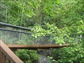 Image for Swinging Bridge at Pinnacle Natural Area Preserve, VA