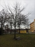 Image for Dedicated Tree - Jihlava, Czech Republic