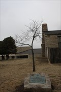Image for Will Rogers Red Bud Tree -- Will Rogers Memorial, Claremore OK