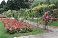 Image for Rose garden, Jardin du Monastere de Cimiez - Nice, France