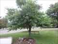 Image for POW/MIA Freedom Tree - Cortland, NY