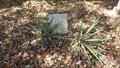 Image for S.R. Quiett ~ Cades Cove Primitive Baptist Church Cemetery ~ TN