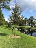 Image for Disney Vacation Club Member's Tree - Lake Buena Vista, FL