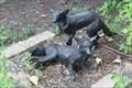 Image for Gray Fox - Denton, TX