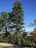 Image for Emerald Hills Golf Course Tower - Redwood City, California