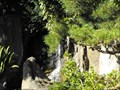 Image for Japanese Garden waterfall - San Mateo, California